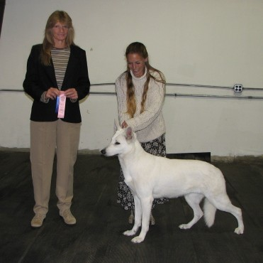 Jada earns her second Major win towards her UKC championship
