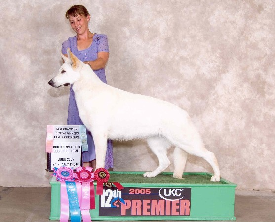 Kyndzie's first Premier!!  She earned her Championship at our UWSC National Specialty, 