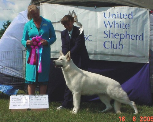 Kyndzie earns her UKC Championship at the 2005 UWSC Nationals with a BF and a BOW!  (6/2005)