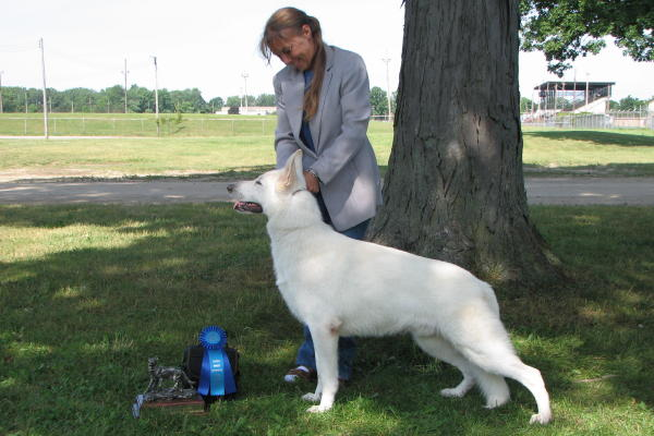 Matthew wins Best Male at the 2009 UWSC National Specialty-- his very first dog show!